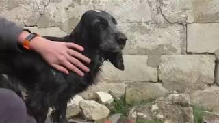 Уход за шерстью собаки / Чески, расчески для собак