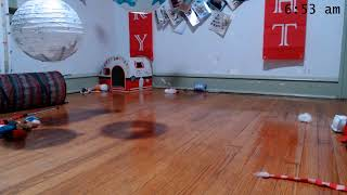 Kitkat Playroom LIVE: The Winter Litter - 6 adorable, adoptable bottle baby kittens
