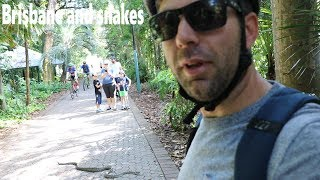 Brisbane and Snakes(part 3)