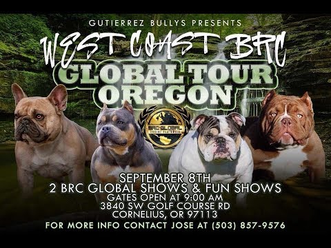 AMERICAN BULLY DOG SHOW SEPT 8TH CORNELIUS OREGON  2 BRC GLOBAL SHOWS AND 1 FUN SHOW