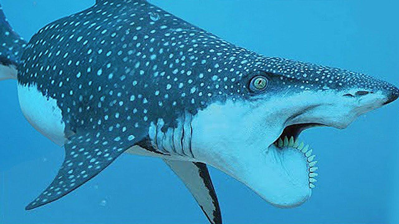 5 Самых редких АКУЛ скрытых в Океане!
