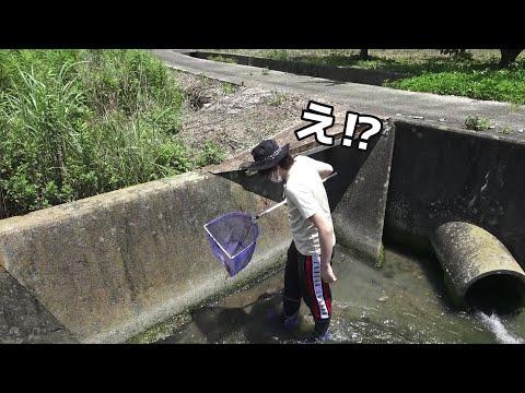 【まぶし】の餌をとりに、山奥の用水路でガサガサしたら、まさかのwwww