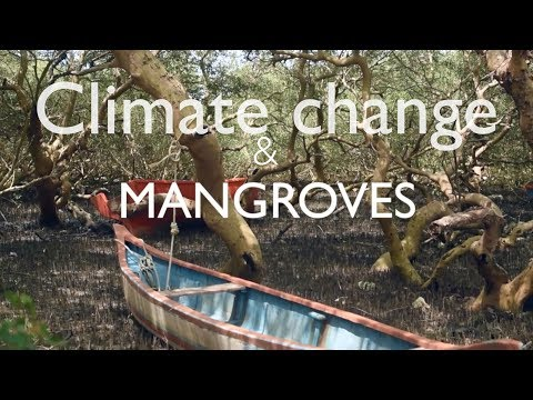 Climate change resilience through mangroves, a Mumbai case study