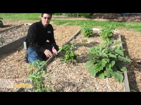 High Plains vegetable gardens
