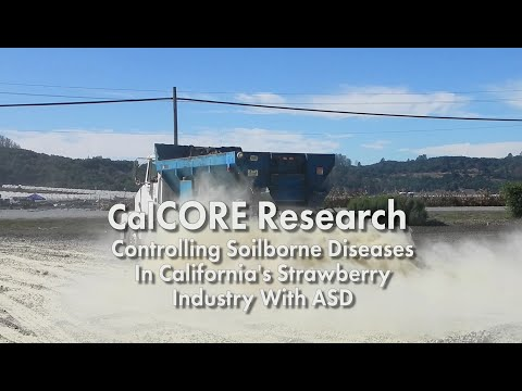 CalCORE Research: Controlling Soilborne Diseases in California's Strawberry Industry with ASD