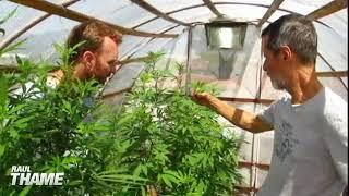 Eduardo Jorge visita cultivo de Cannabis Sativa com Raul Thame