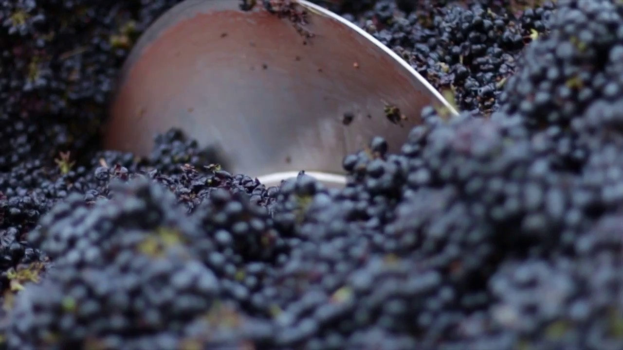 Traveling Vineyard Videos Crunchbase
