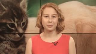 Как защищают права животных в разных странах мира