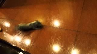 Котенок занос
