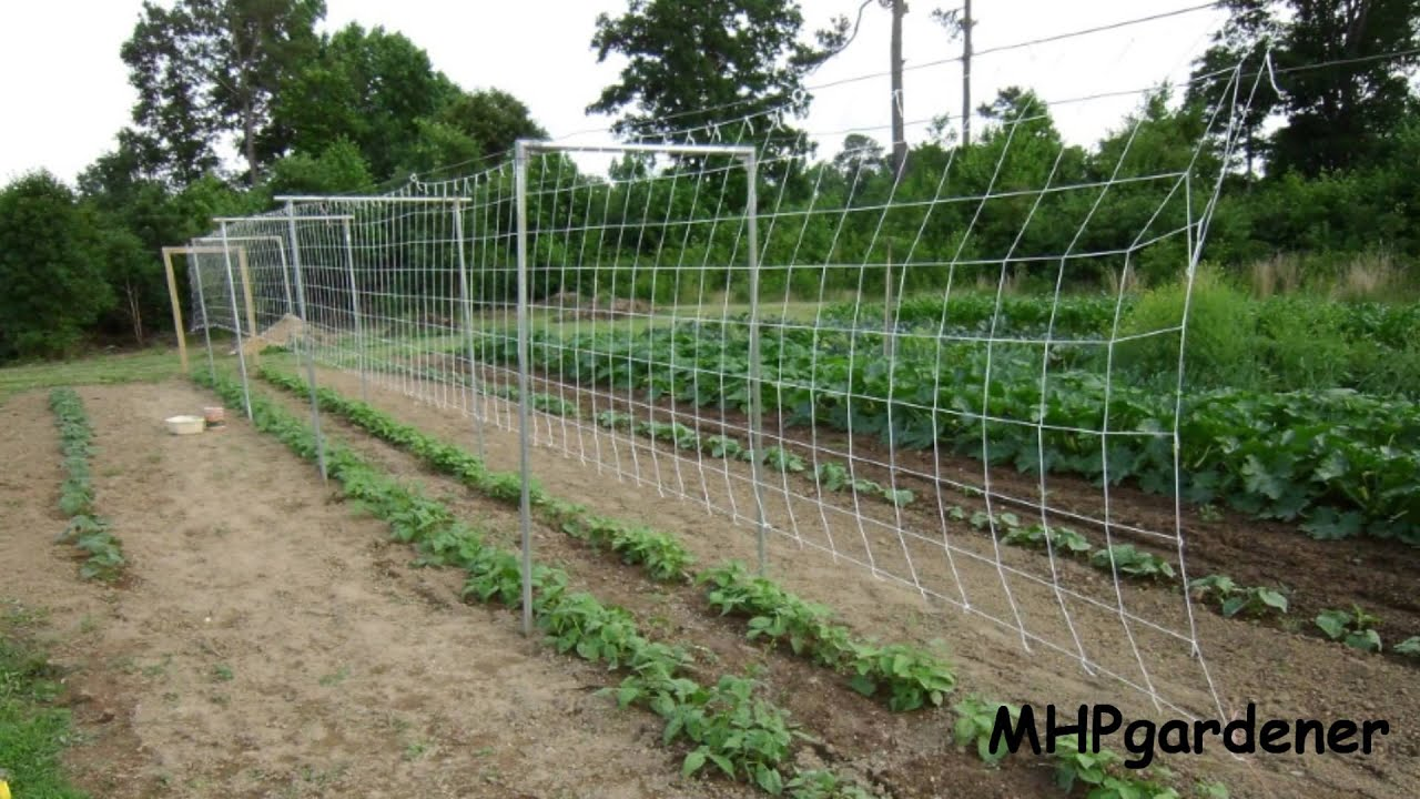 pole bean trellis how to set it up youtube