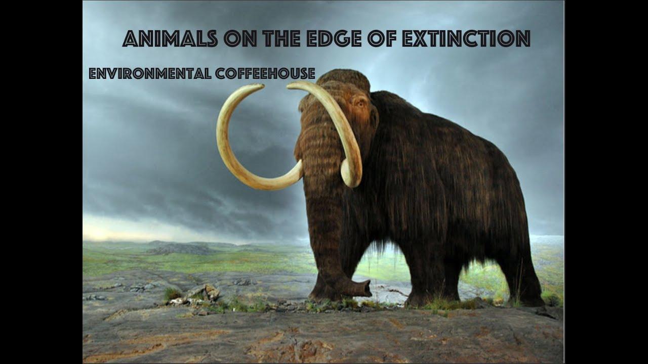 Animals on the Edge of Extinction