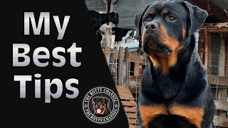 7 Tips For a new Rottweiler owner! What you need to know before you get a rotty puppy! 3 Rottweilers