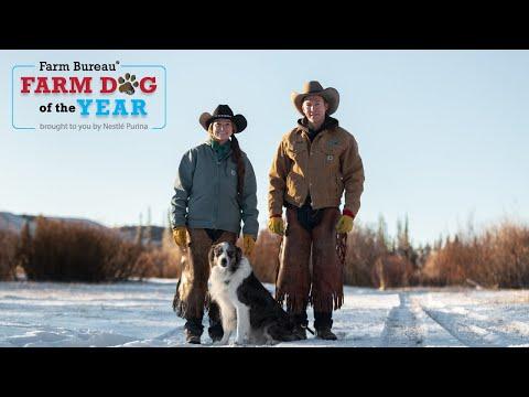 Meet This Year's Farm Bureau Farm Dog of the Year