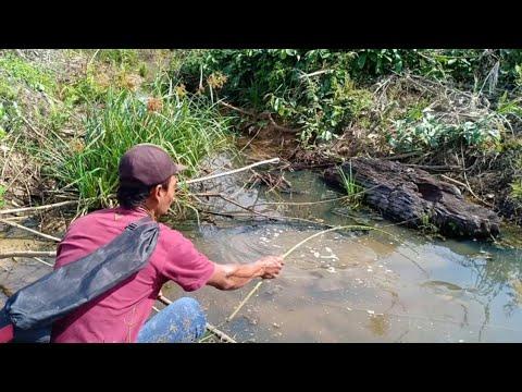panen ikan saat mancing di sungai yang surut karena kemarau