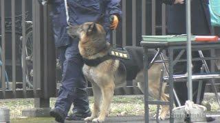 皇居乾門で警衛にあたる皇宮警察犬。皇宮警察に所属する警察犬4頭のうち...