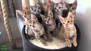 НОВИНКА Лучшее смешное видео про животных 2013