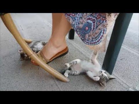 Cute kitten playing with my skirt | Cutest kitten video ever