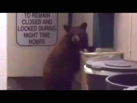 Watch Bear Cub Obey Police Officer's Orders After Breaking Into Sheriff's Office