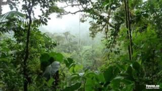 An Active Foggy Pathway - Alio Die & Antonio Testa