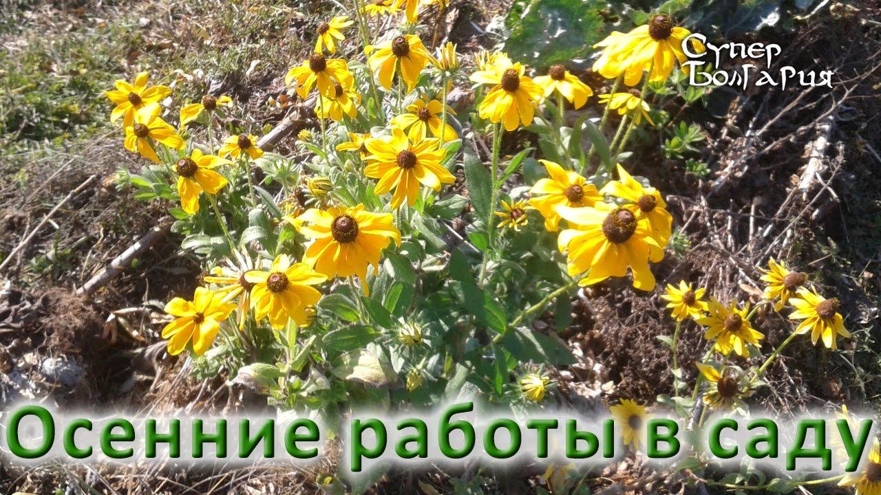 50% павлодарского картофеля уходит на экспорт в Россию - YouTube