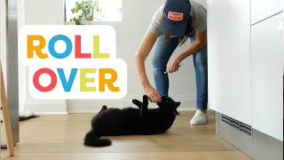 Teach Your Cat To Roll Over With Clicker Training