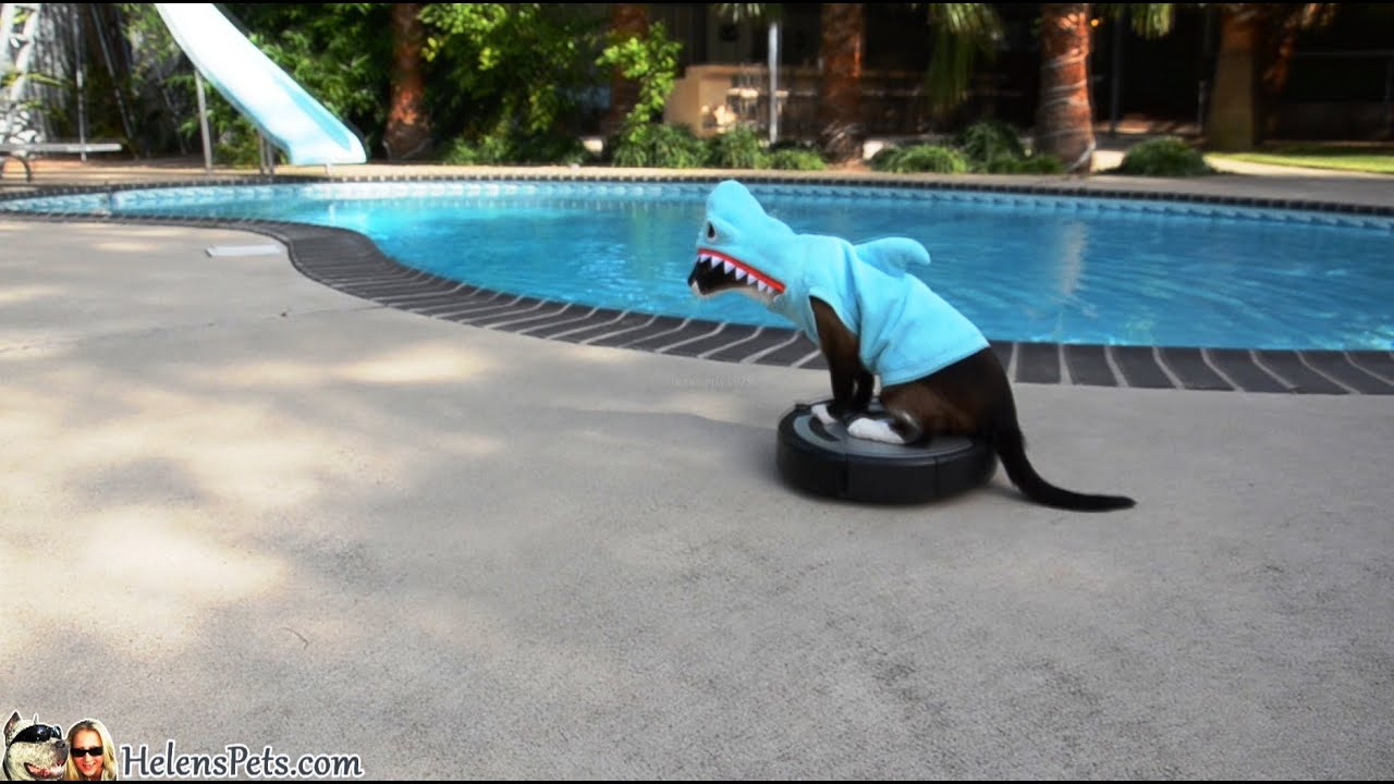Cat Riding Dog In Swimming Pool