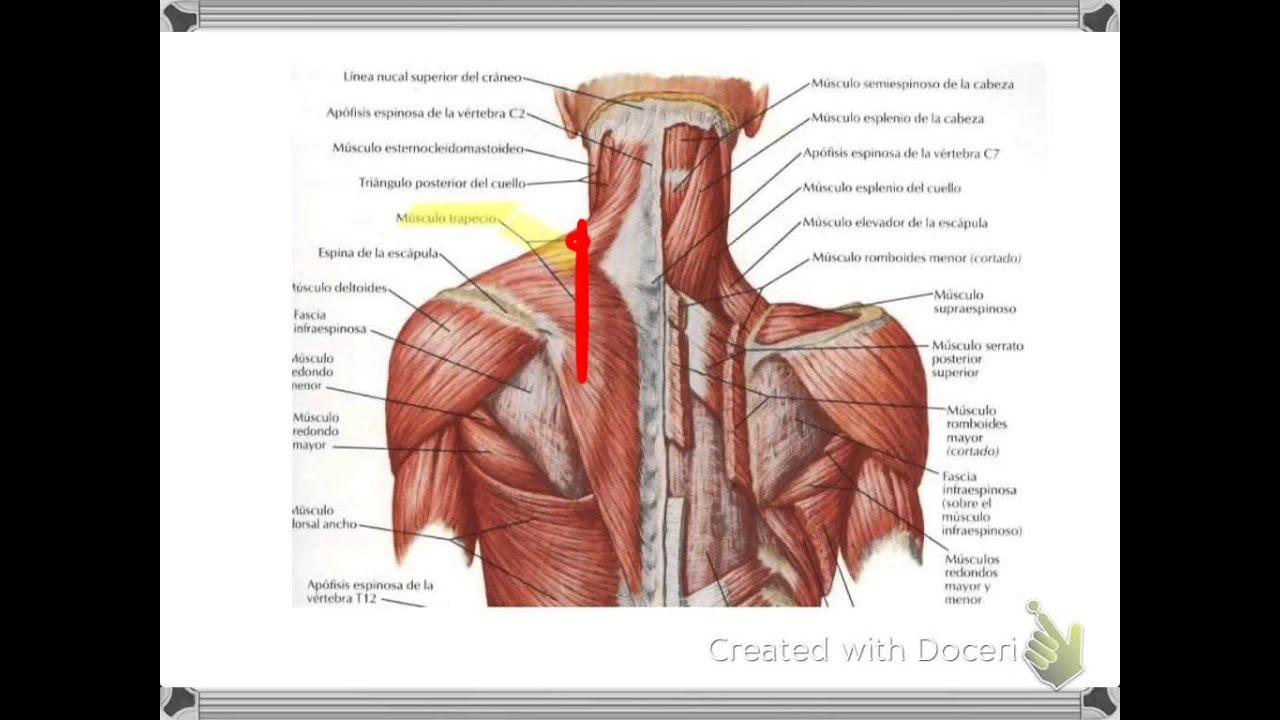 Que puede estar enfermo en lo bajo del vientre a la izquierda y dar en la espalda