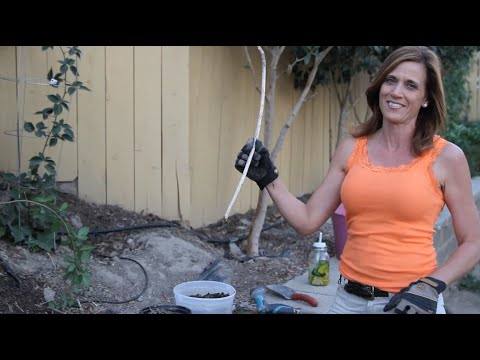 How To Propagate Berry Bushes In Three Easy Steps