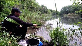РЫБАЛКА На ПОПЛАВОК ЛЕТОМ На красивой ЛЕСНОЙ РЕЧКЕ Ловля крупной плотвы на поплавок Рыбалка 2021