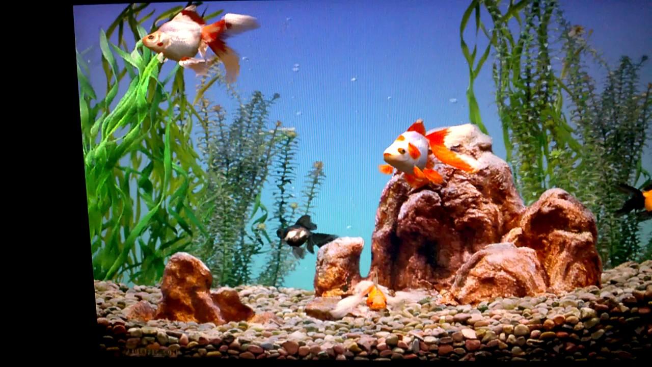 Aquarium Screensaver Demo