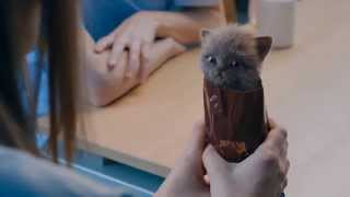 Mcvities Digestive Biscuits Advert - Kittens