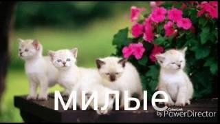 Коты бывают разные