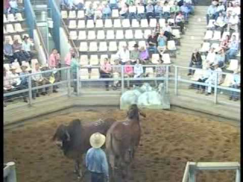 ROCKHAMPTON BRAHMAN WEEK 2008 LIVE WEBCAST LOT929