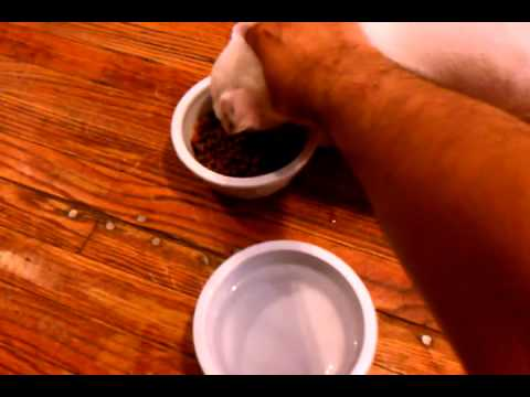 pit-bull-puppy-eating-diamond-naturals-dry-food-for-puppy