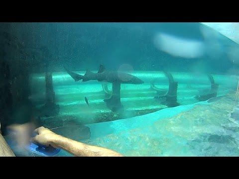 Shark Tank Water Slide at Atlantis