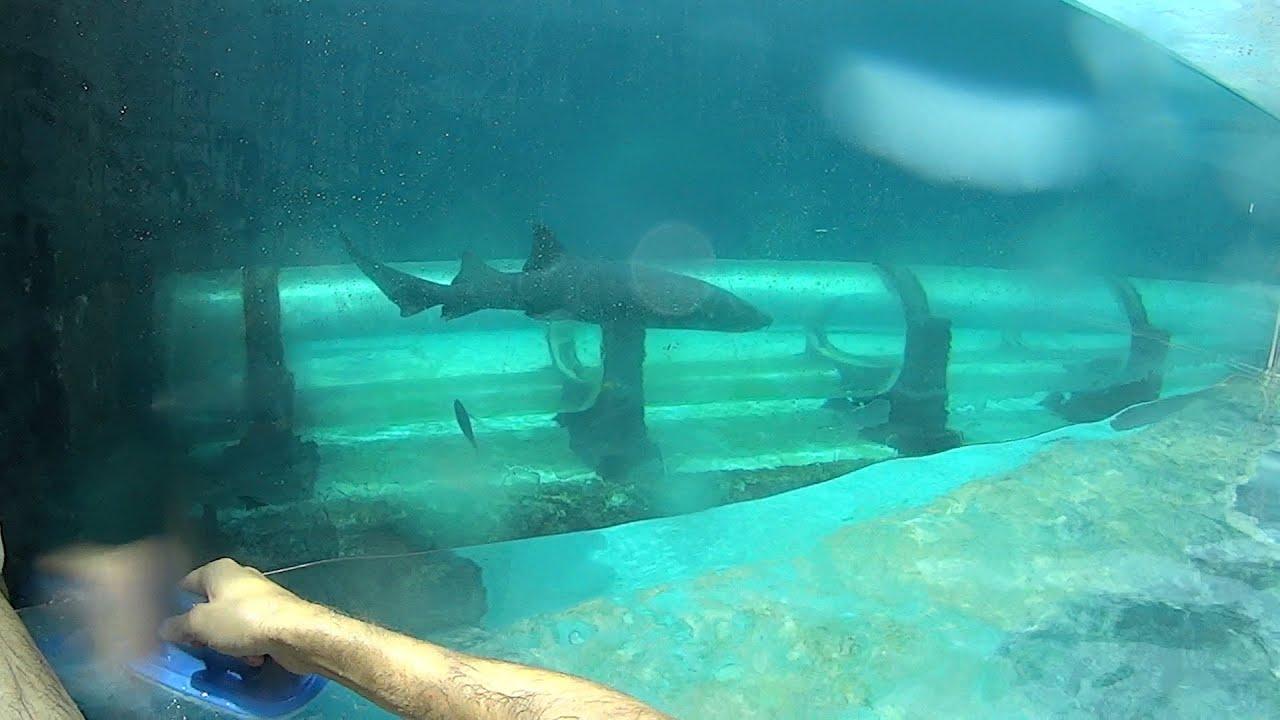 Shark Tank Water Slide at Atlantis - YouTube