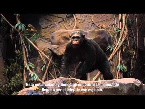El Planeta De Los Simios: Confrontación - La Historia de César (HD)