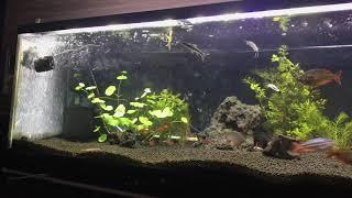 1200水槽 熱帯魚 レインボーフィッシュ レッドファントム ルブラ