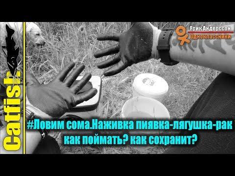 #Ловим сома.Наживка пиявка-лягушка-рак как поймать? как сохранит?Видео снято на Garmin  VIRB® XE