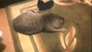 Кошка и носки