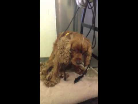 jordy a1504535 south los angeles animal shelter 8 30 14 youtube