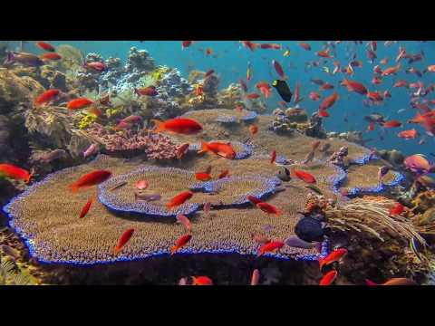 Introduction to online underwater photography course
