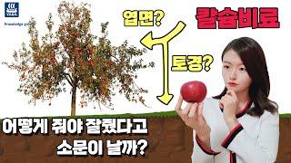 칼슘비료 효과적인 사용방법(과수편) | 농사100단