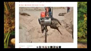 Raid 0 Data Recovery Bundy Ranch Recovering Cattle from Mass Graves   Killed by BLM! Daboo77