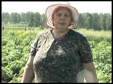 овощи гмо с фото