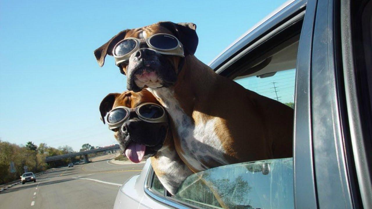 Смешные картинки про поездки на машине прекрасный