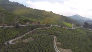 recce flight at BOH Tea Plantations, Cameron Highlands