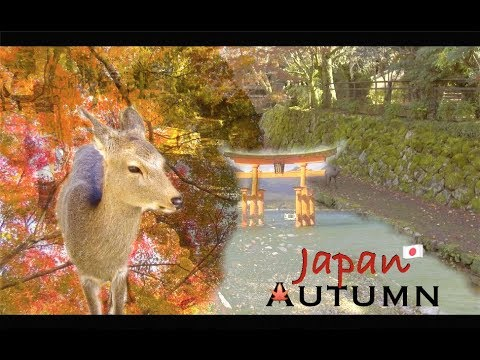 Autumn in Japan 🍁 4k (Ultra HD) - Japan Travel Vlog : Osaka, Kyoto, Nara & Hiroshima