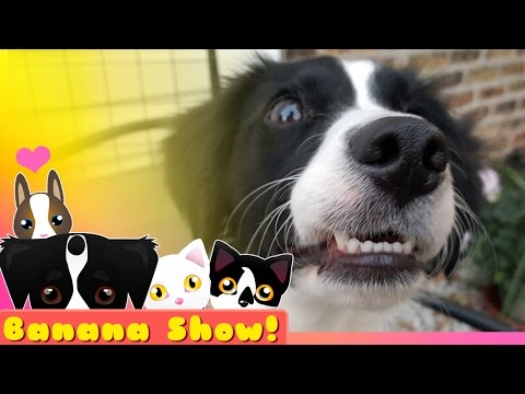 Puppy and Cat FIGHT!? 🐶 | Banana the Talking Dog Show Ep: 01
