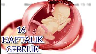 Hamileliğin 16. Haftası